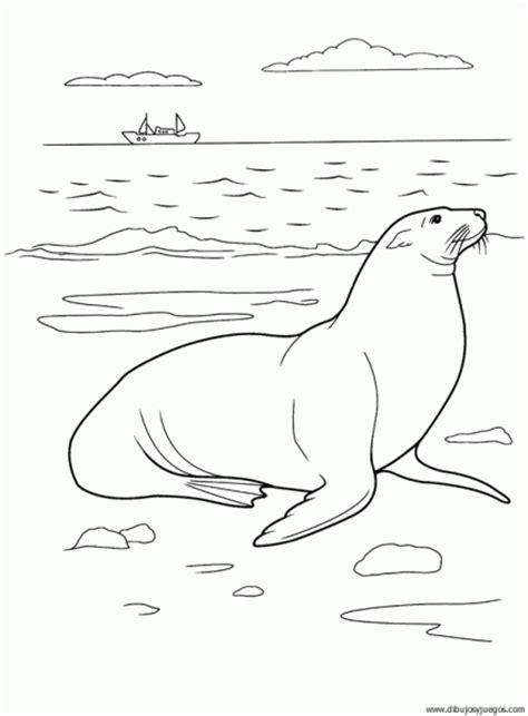 imagenes leones marinos para colorear imagen de un lobo marino para colorear imagui