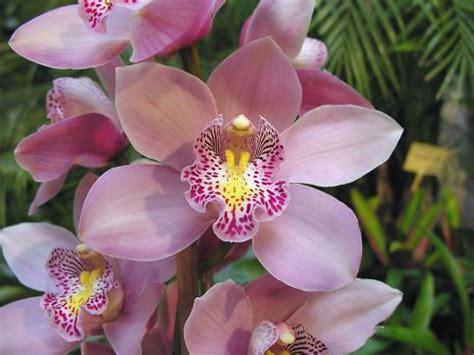 fiore di orchidea il linguaggio dei fiori jessicaugolotti