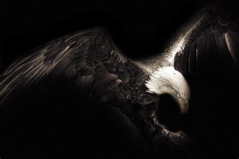 Wallpaper Sayap Hitam | gambar kreatif sayap hitam dan putih paruh burung