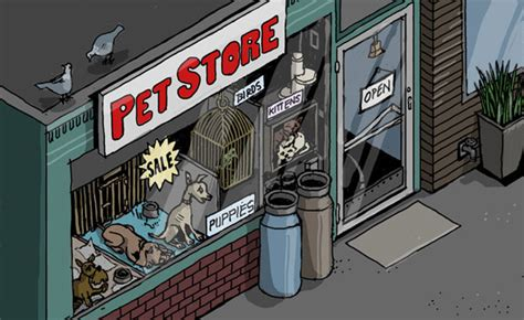 pet store to buy puppies i worked at a large commercial pet store and what they do to puppies will shock you