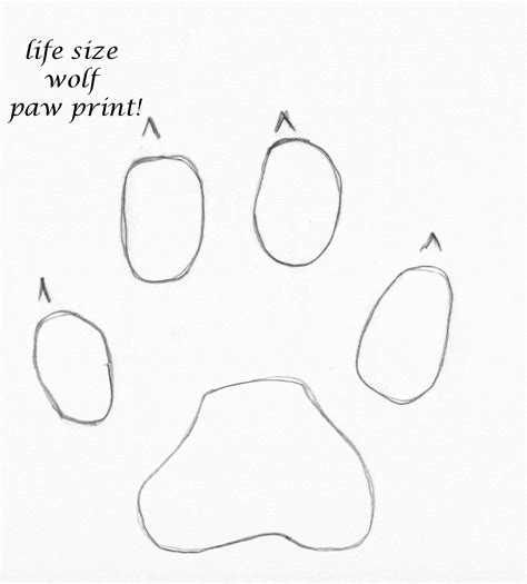how to a not to paw at you how to draw wolf paw print