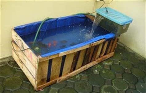 Bibit Ikan Koi Yang Baik berbagai cara budidaya ikan koi di kolam terpal simple