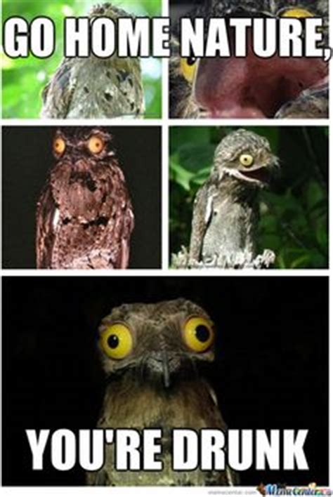 Potoo Meme - 1000 images about potoo on pinterest weird new memes