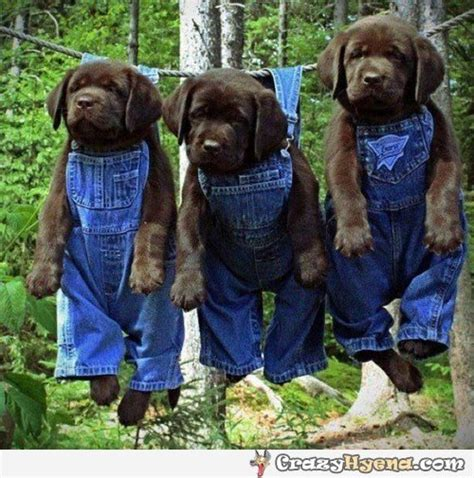 puppies wearing clothes dogs wearing clothes