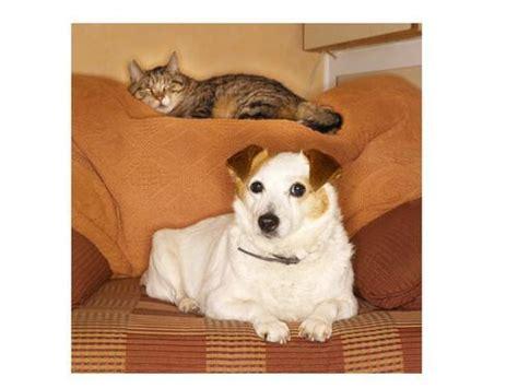 pawfect puppy pawfect pet pawfectpet