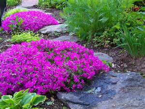 creeping phlox ground cover outdoors pinterest creeping phlox flower beds and flower