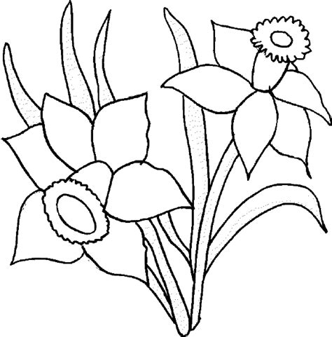 black and white coloring pages of flowers flower coloring pages daffodil coloring page flower