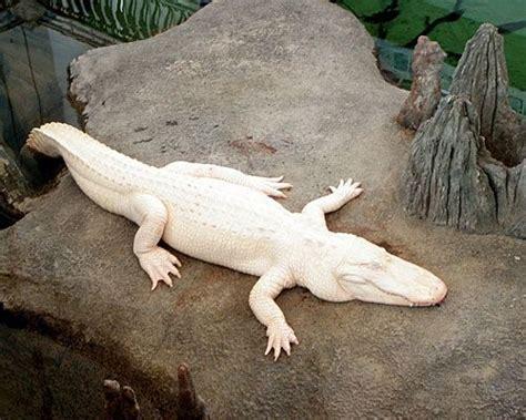 imagenes de animales albinos animales albinos animales y mascotas pinterest
