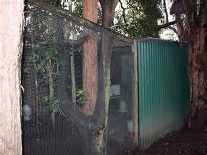 The Chook Shed by Building A Chook Shed Matters Abc Radio National