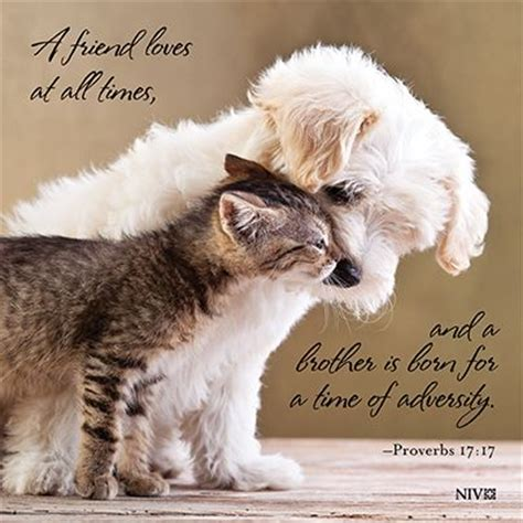 bible verses about dogs 49 best images about inspiration for on