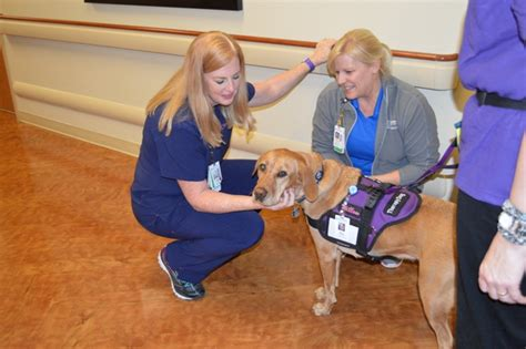 dog house rockwall texas health presbyterian hospital rockwall spreads the love with pet therapy blue