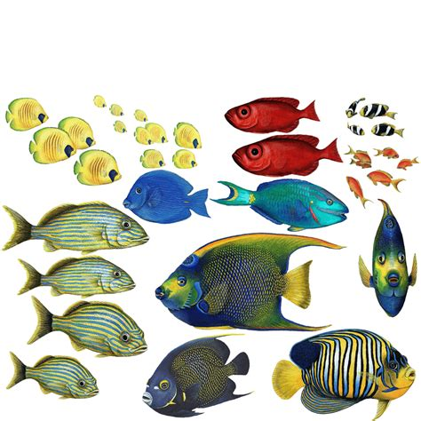 Sale Stiker Bulat 5 Cm 1 Pack Isi 15 tropical fish wall stickers combo pack that measures 3 x