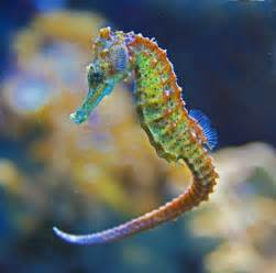 what color are seahorses homeless poorgirlintexas
