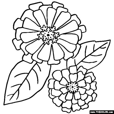 Coloring Page Zinnia by Free Coloring Pages Of O Keeffe