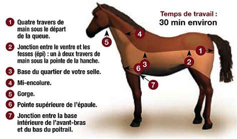 Peut On Tondre En Hiver by Quelle Tonte Pour Mon Cheval