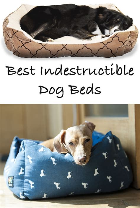 best dog bed for chewers best indestructible dog beds for tough chewers dog beds