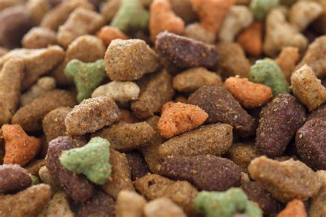 pit food cat food reviews pet food society