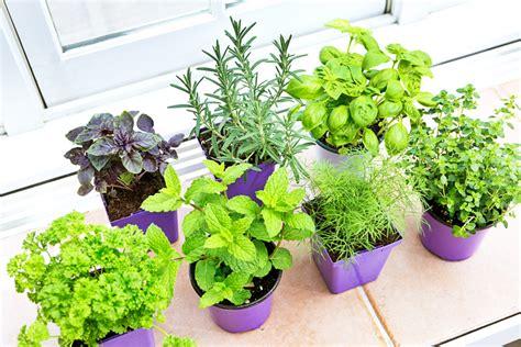 erbe aromatiche in casa erbe aromatiche consigli per coltivarle bene in casa