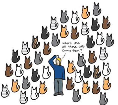 neutering an why neuter your cat