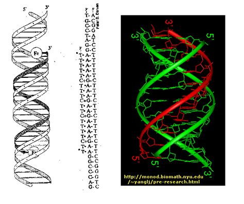 Triple Helix Dna | satan s counterfeit matrix pt8 dna mystery of the iniquity