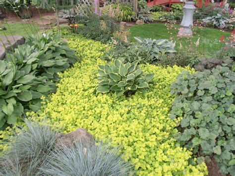 backyard ground cover ideas ground cover ideas cool low maintenance landscaping ideas