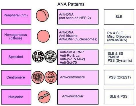 pattern analysis sle test image gallery lupus ana