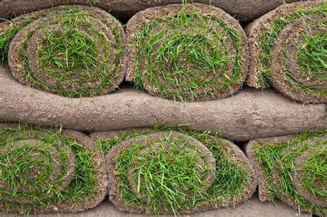 tappeto in inglese tappeto erboso prato inglese immagine stock immagine