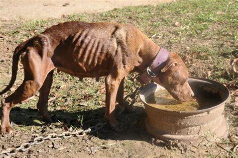 dmx fighting dmx arrested again in underground pit bull fighting bust pets nigeria