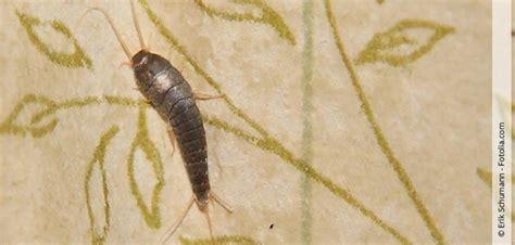 Badezimmer Kleine Tierchen by Silberfischchen Im Bad Eine Warnung Vor Schimmelbildung