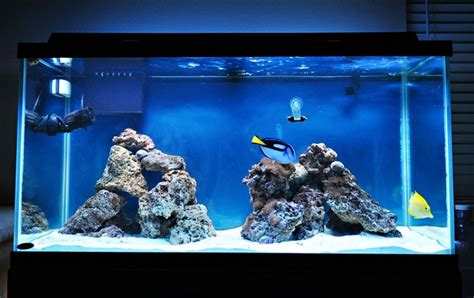 live rock aquascaping ideas aquascaping live rock ideas 28 images aquascaping the