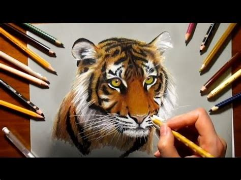 sketchbook rock the tiger mp3 colored pencil pencil drawing tiger speed draw