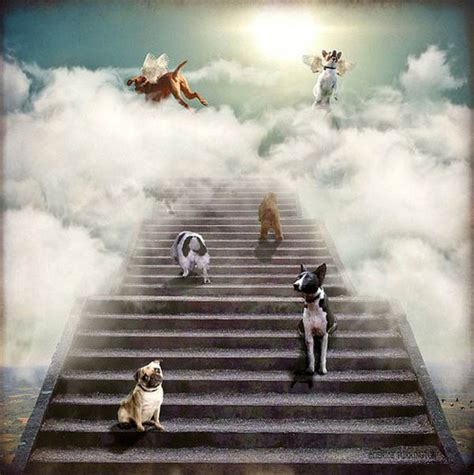 dogs go to heaven pope francis says all dogs go to heaven