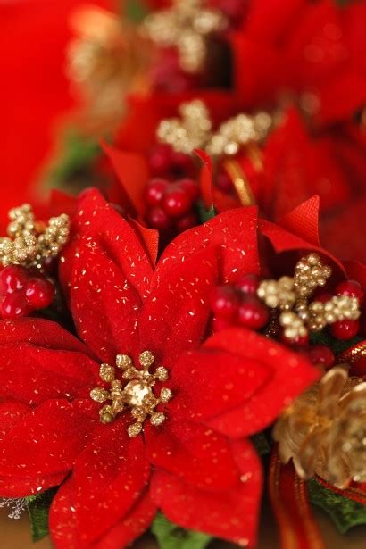 red christmas flower decoration  stock photo public domain pictures