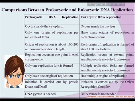 Where In A Eukaryotic Cell Does Translation Occur by Comparisons Between Prokaryotic And Eukaryotic Dna Replication Youtube