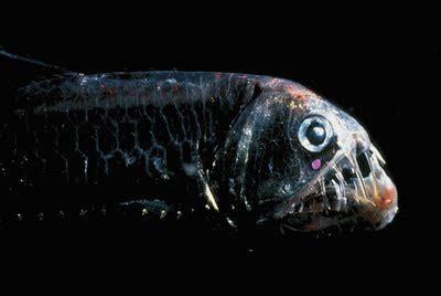 imagenes raras del oceano un mundo animal 184 los animales mas extra 209 os del oc 201 ano