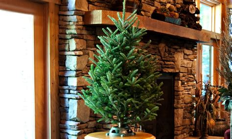 best rated fresh trees delivered to home fresh cut 3 4 foot tree with stand groupon