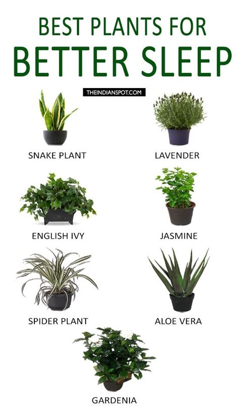 best plants for bedroom best plants to keep in your bedroom to help you sleep