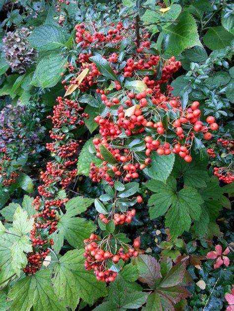 Lackieren Im Winter Draußen by Fruchtschmuck F 252 R Einen Sch 246 Nen Garten Im Herbst Garten
