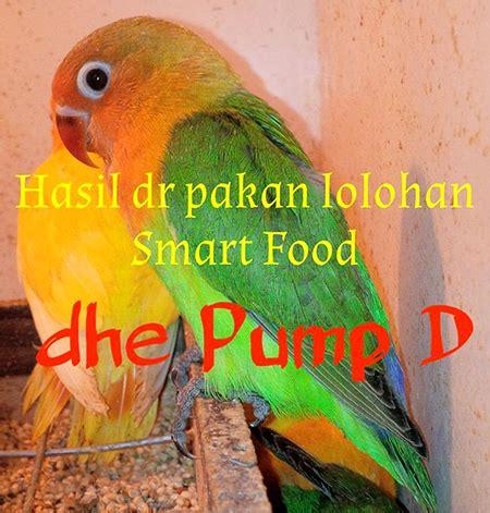 Pakan Lolohan Anakan Murai Batu smart food pakan lolohan untuk semua anakan burung om kicau