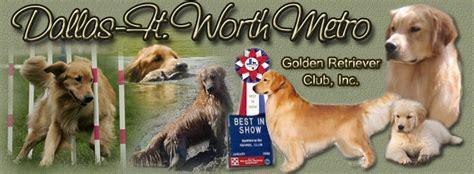 golden retriever fort worth golden retriever breeders fort worth dogs our friends photo