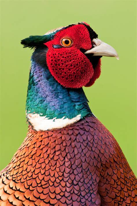 Free Range Chicken Coop For Sale – Setup a Mobile Chicken Coop and Free Range those Birds!