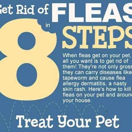 get rid of fleas in 8 steps infographic petcarerx