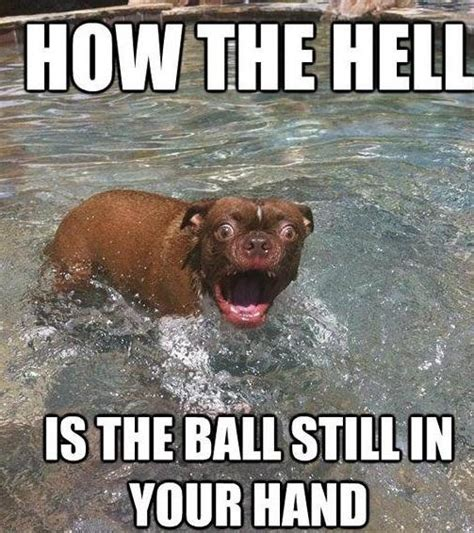 T Dog Meme - 17 best images about idiot animals on pinterest no