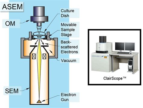 diagram of scanning electron microscope electron microscope diagram labeled www pixshark