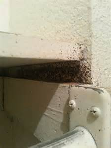 bed bug extermination process bed bug extermination tx get rid of bed bugs now