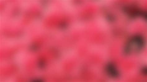 wallpaper for pc pink pink desktop wallpaper 175264