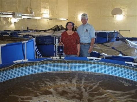 backyard shrimp farming iowa couple retrofits former elementary school into shrimp