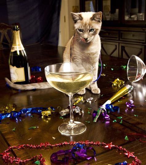 the year of the cat new year a cat owner s new year s resolutions cattime