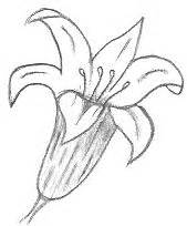 flower drawing templates drawing templates