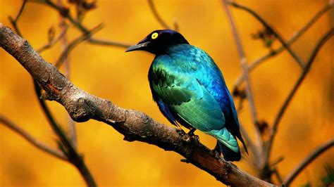 wallpaper birds amazing wallpapers birds hd wallpapers bird wallpapers